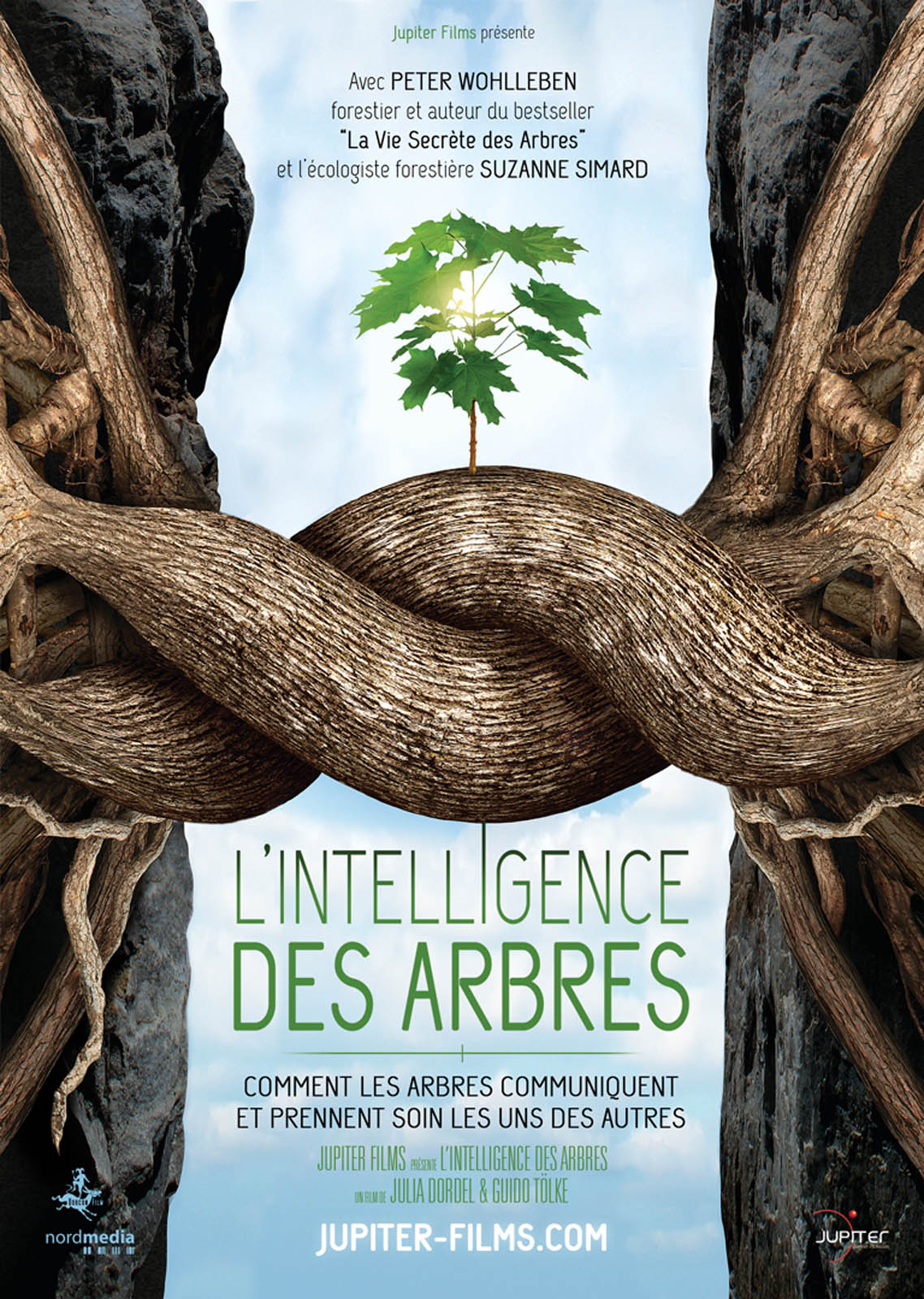 Diffusion du documentaire « L'intelligence des arbres » le mardi 17 octobre